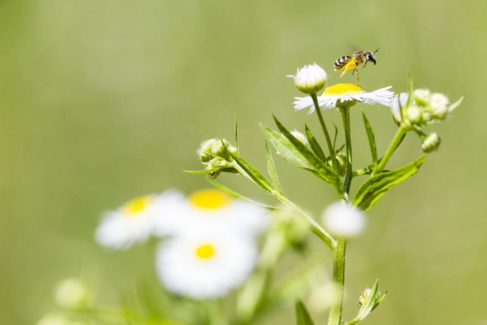 170622_3522_bees1160.jpg