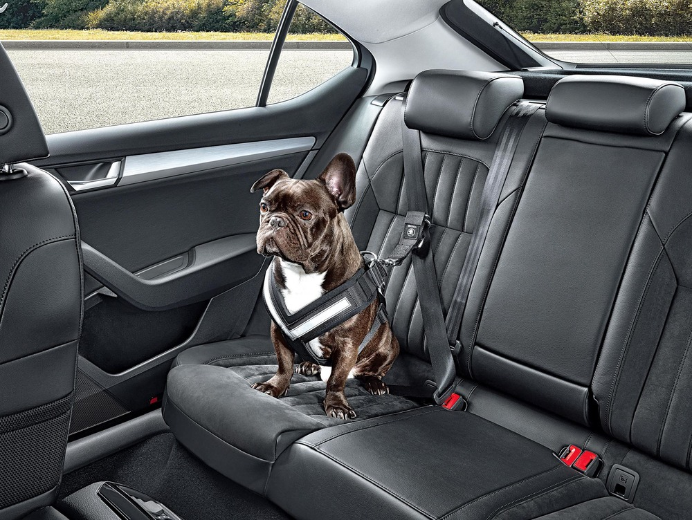 Skoda reveals doggy seat belt