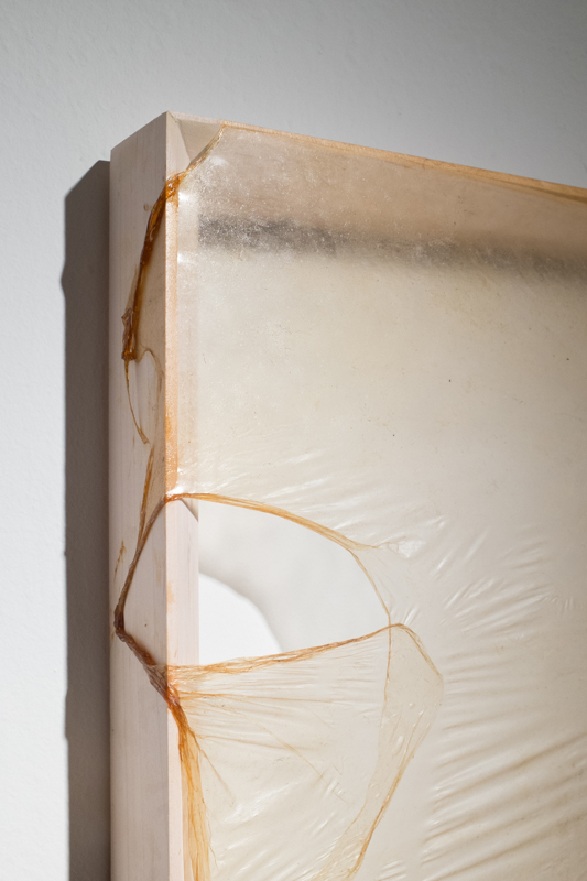 Skins (detail), Kombucha Culture on Wood Frame, 21x13 inches, 2015