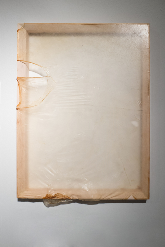Skins, Kombucha Culture on Wood Frame, 21x13 inches, 2015