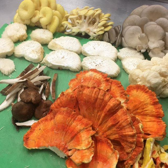 Some beautiful #wild and #cultivated #ohiomushrooms for a new dish this weekend.