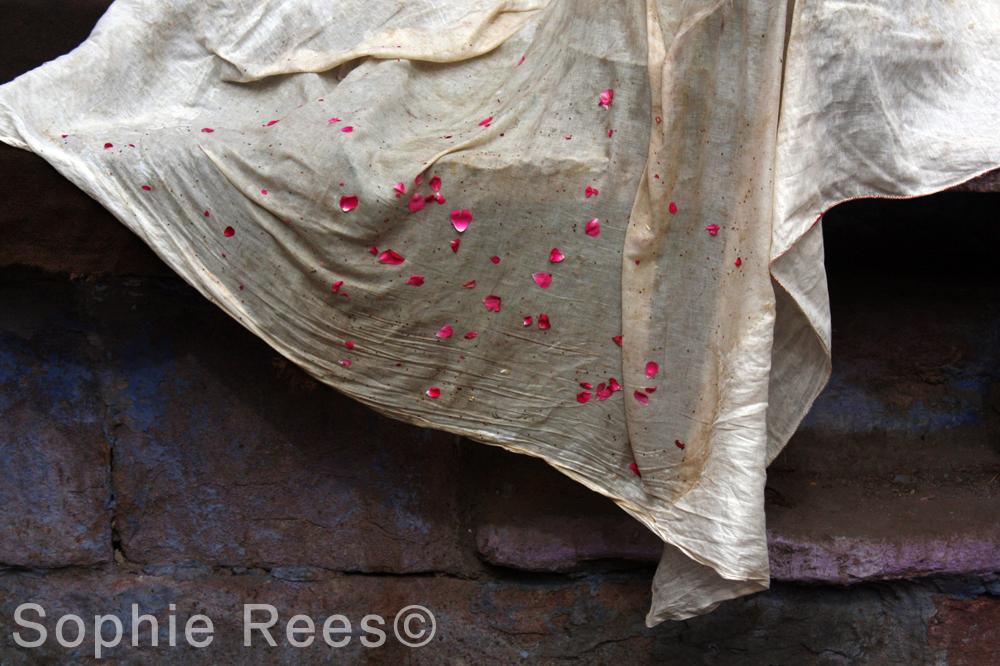 Petals, Udaipur, 2013