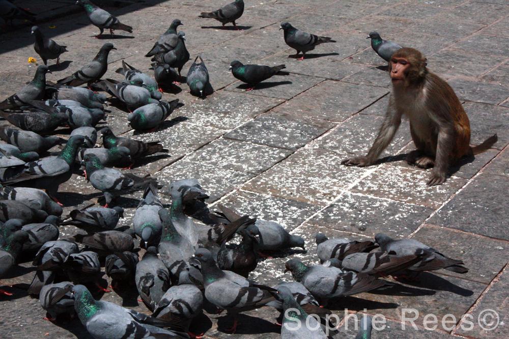 Feed the birds, Kathmandu, 2013
