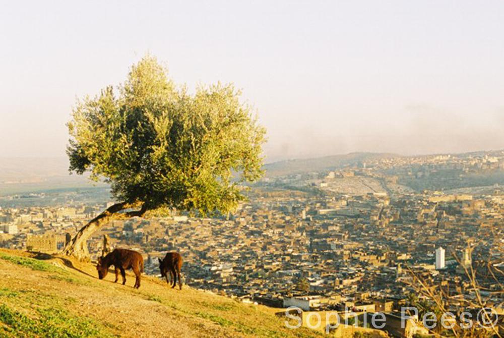 Above Fez, 2008