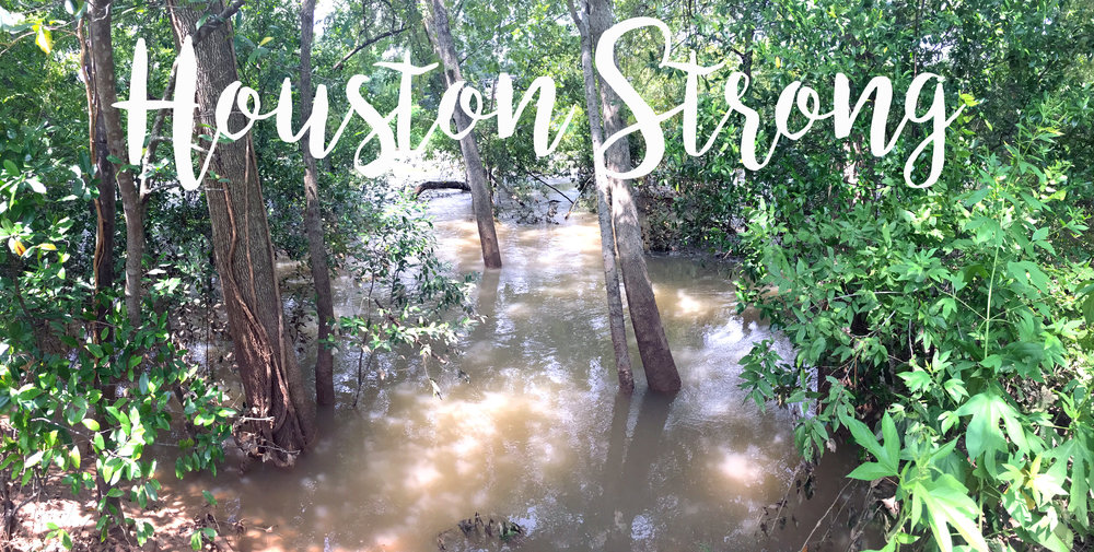 Photo of Buffalo Bayou right down from my house by Clint Herod