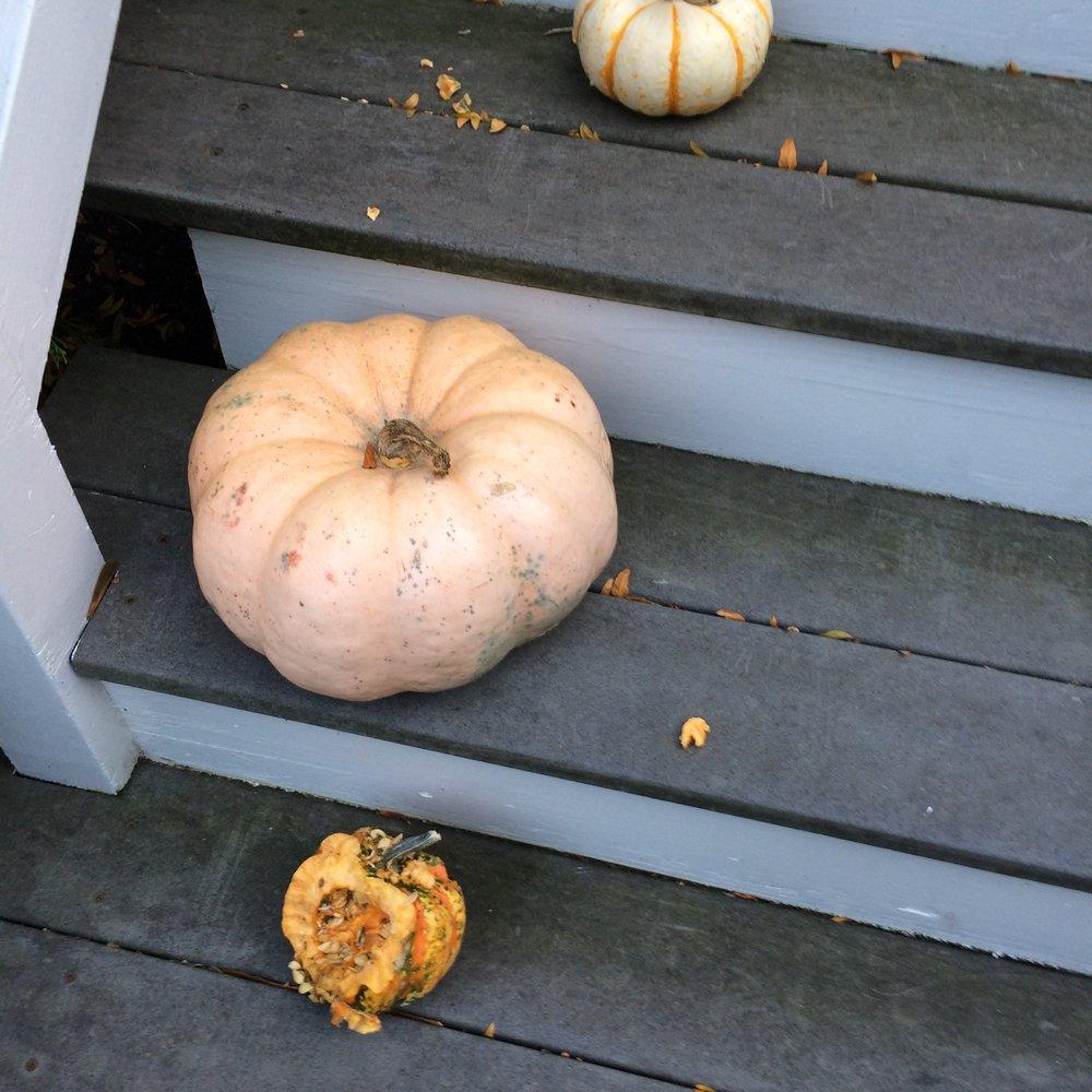 Pumpkins in the wild