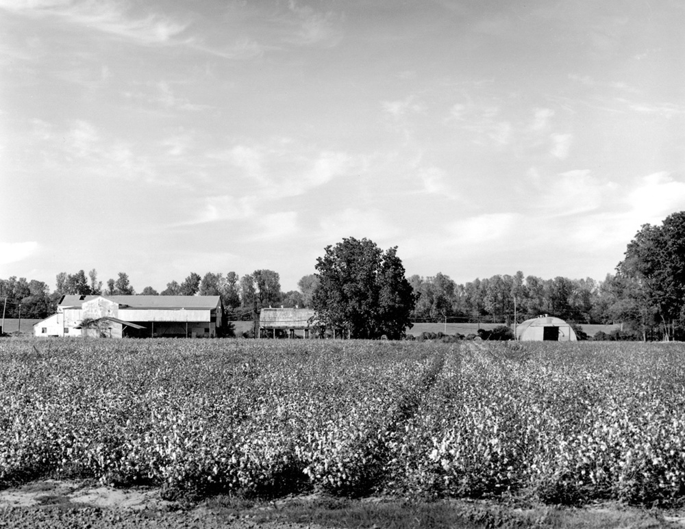 Cottonfieldfarmbuildings.jpg
