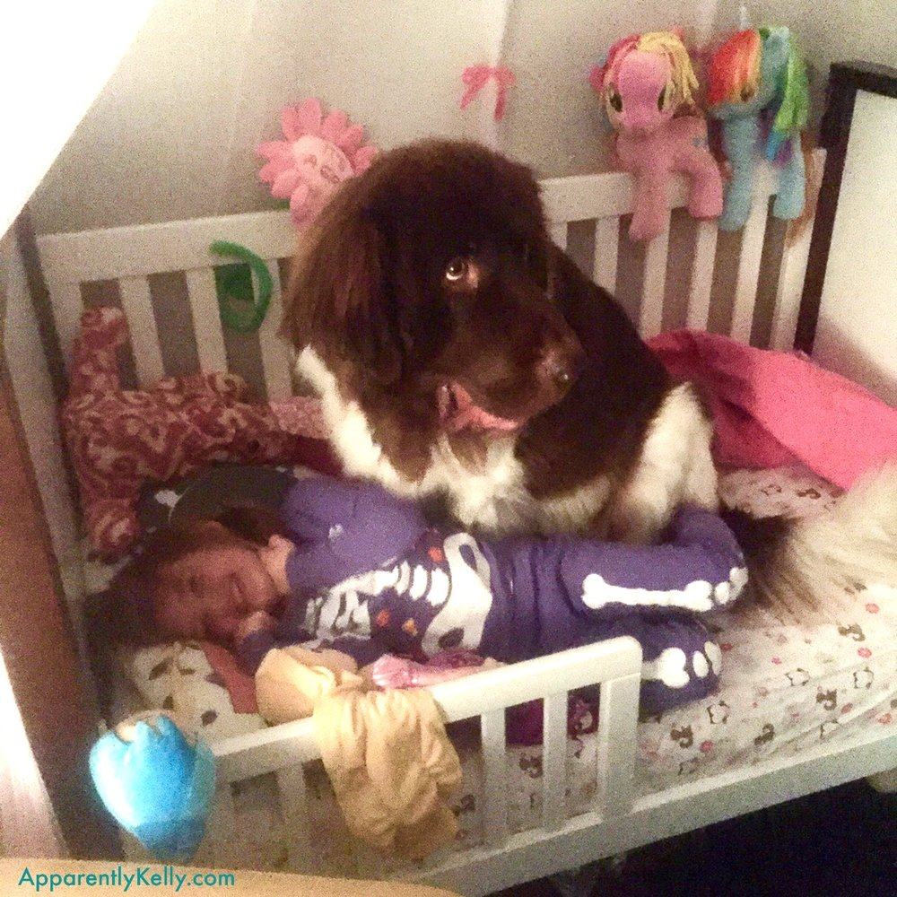 Buddies in Tiny Bed.jpg