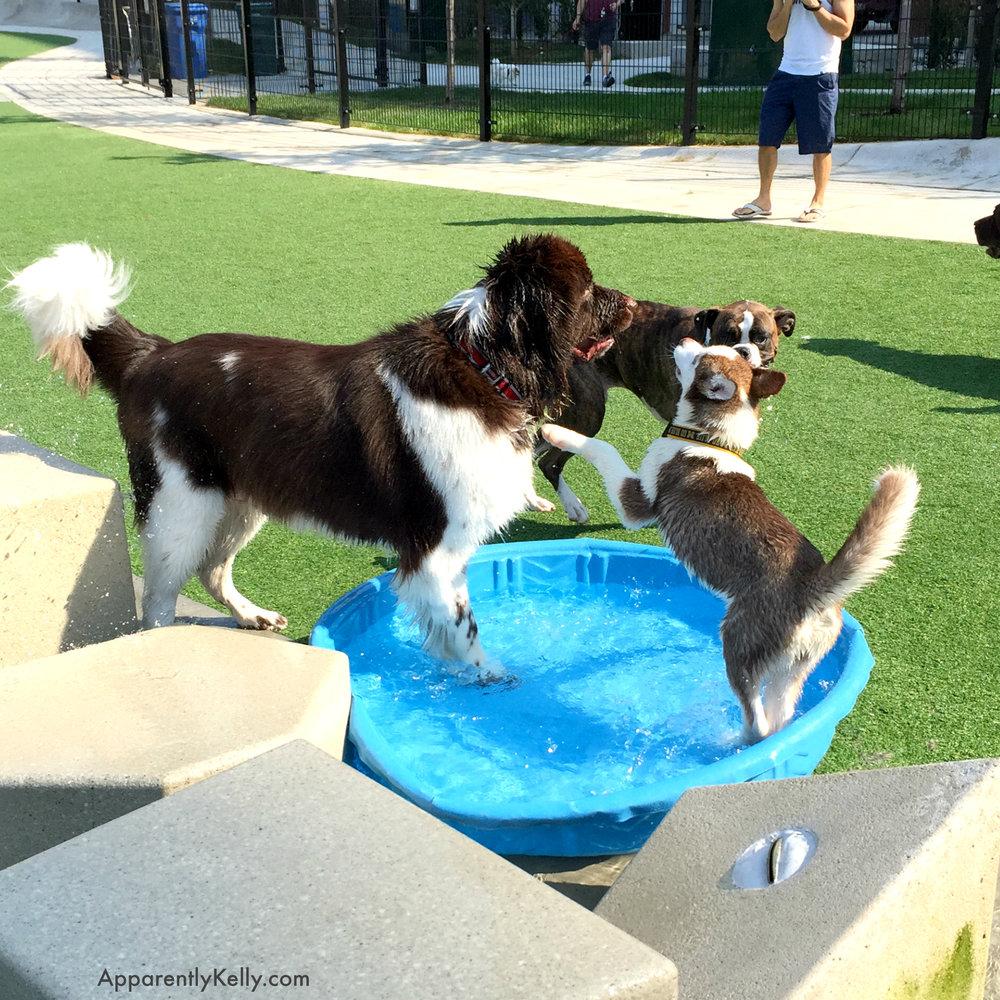Bruce Husky Pool.jpg