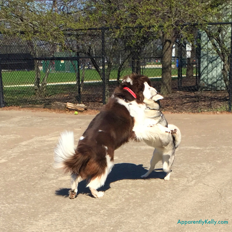 Huskey Hug.jpg