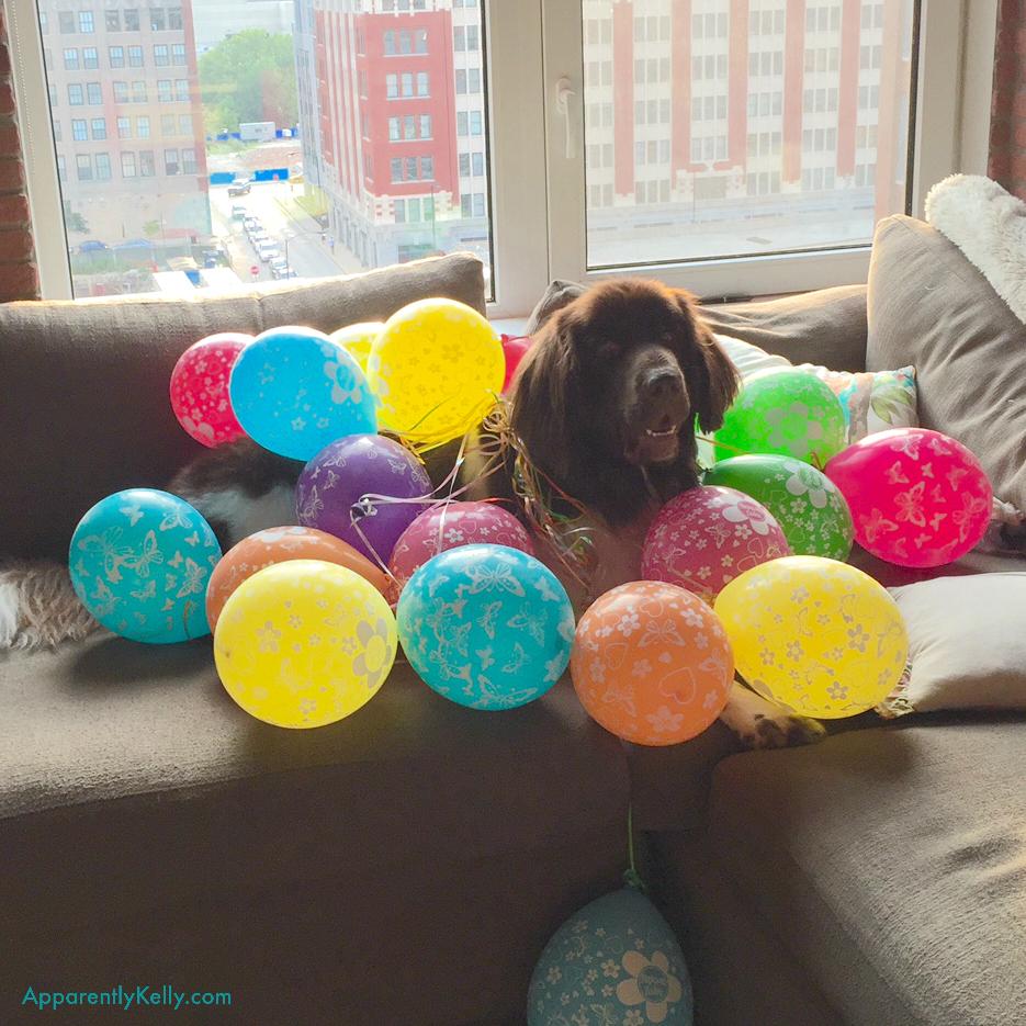 Balloon Bruce.jpg