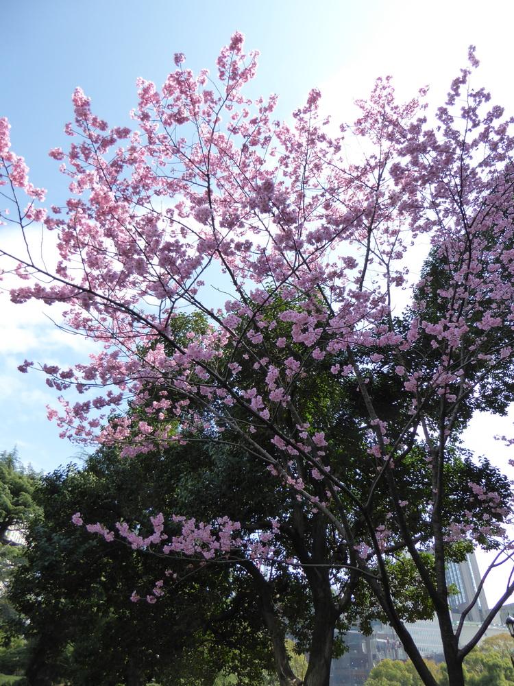 Hibiya Park (2)