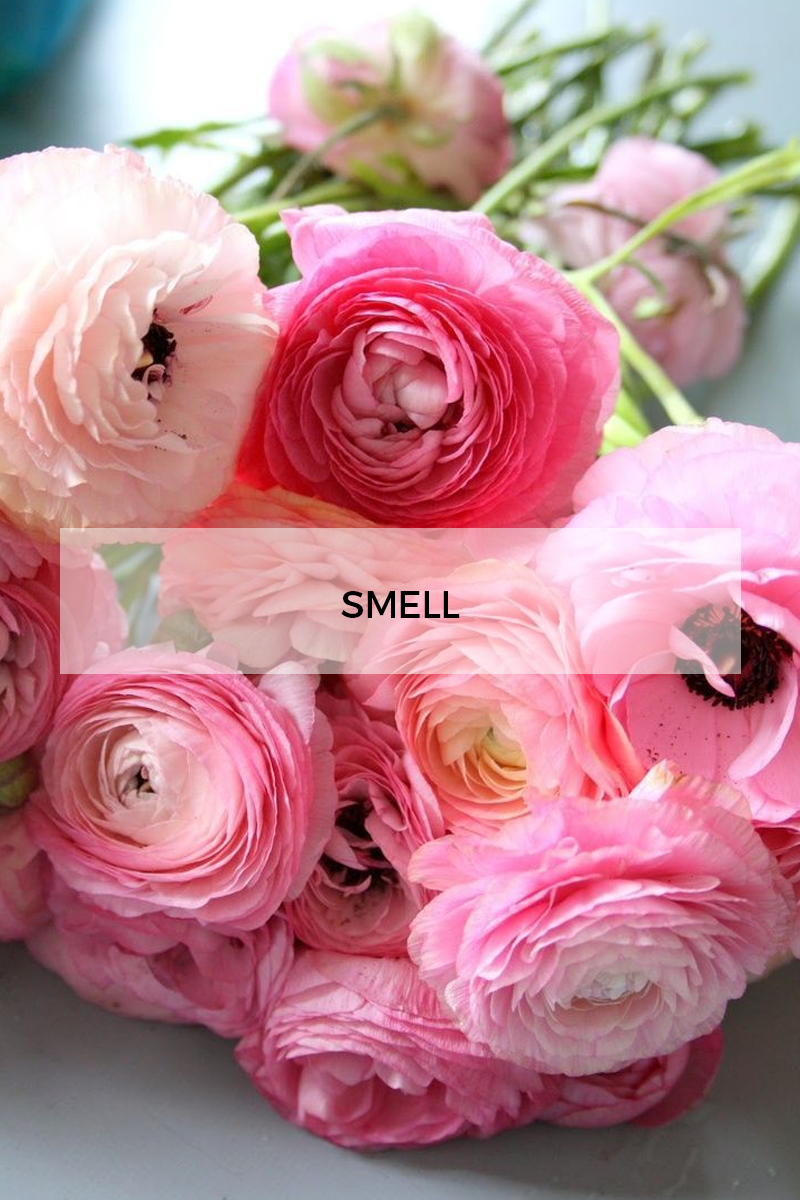 Style Fragment Inspiration Smell, Shine, Sip, Smile