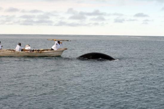 whalingharpoon.jpg