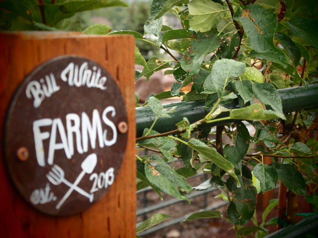 BW Farm Signs Next to Freshly Planted Apple Trees