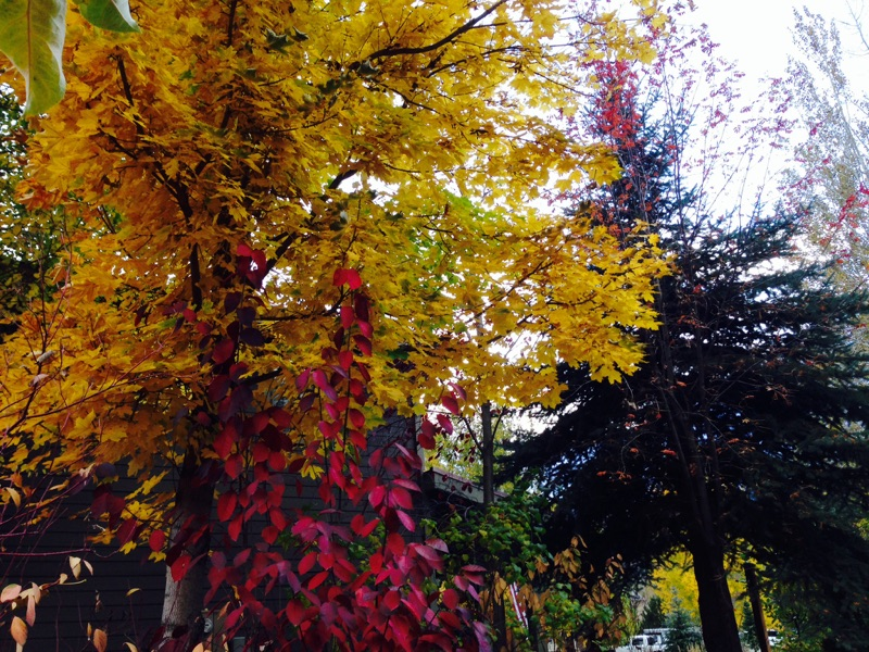 The trees are changing colors as Fall is in full swing.