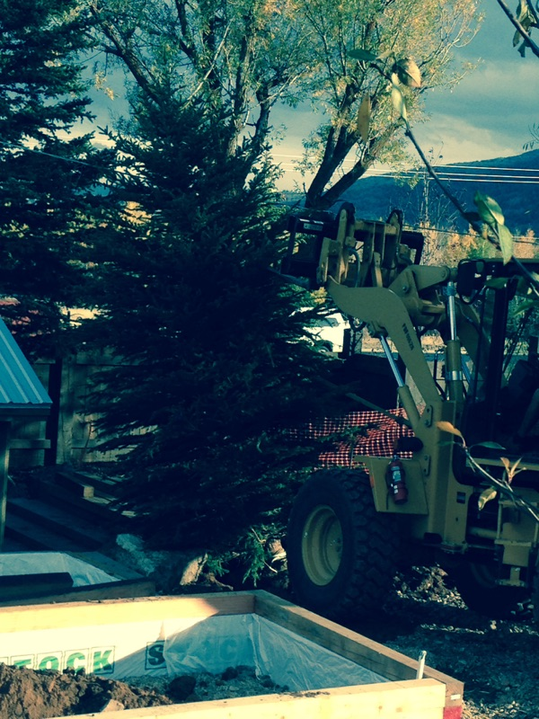 Planting a huge spruce tree by the BW Farm workshop