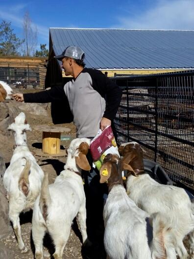 Bill feeding the goats