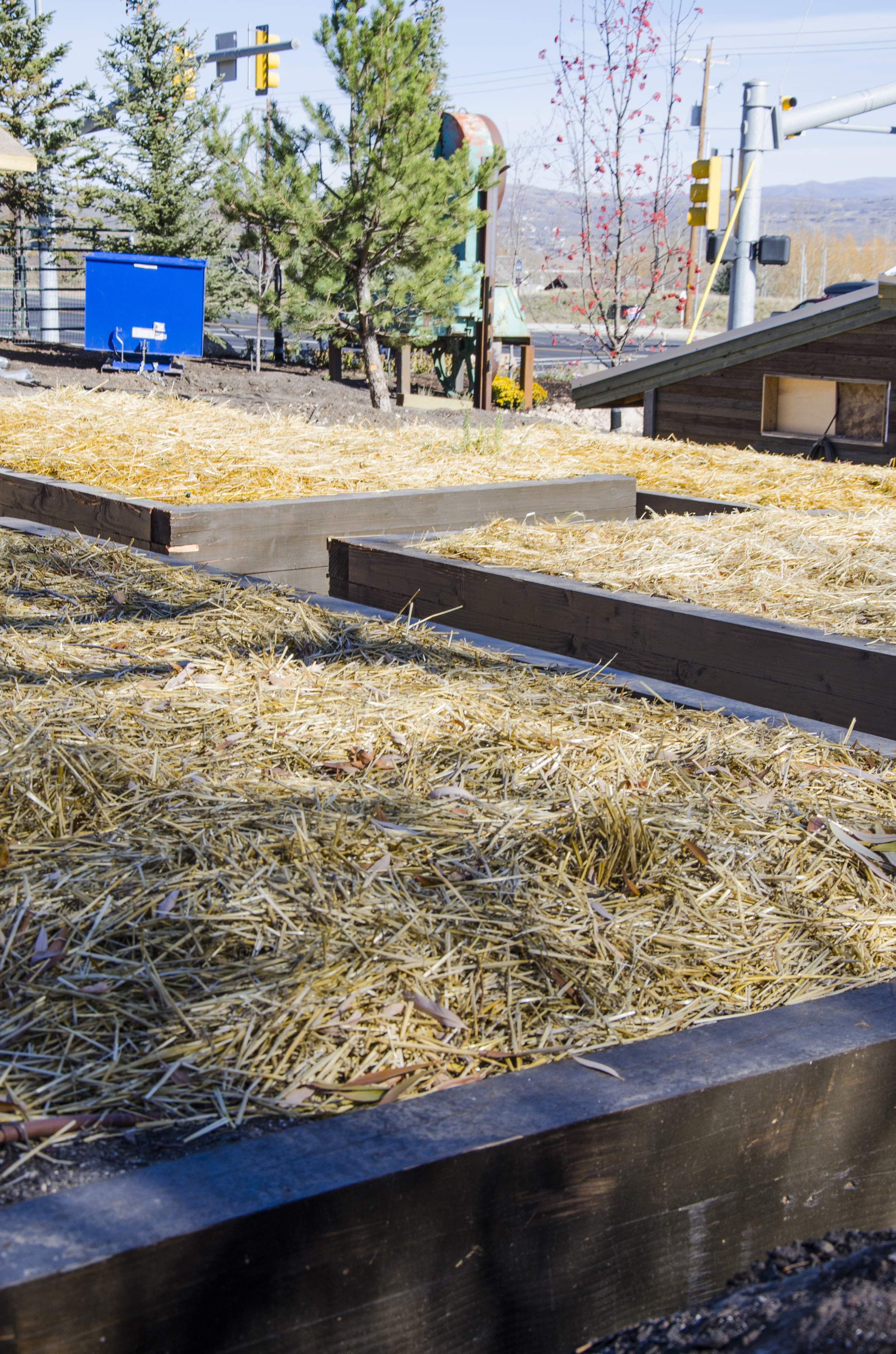 The garden beds have been covered with straw to protect them over the Winter.