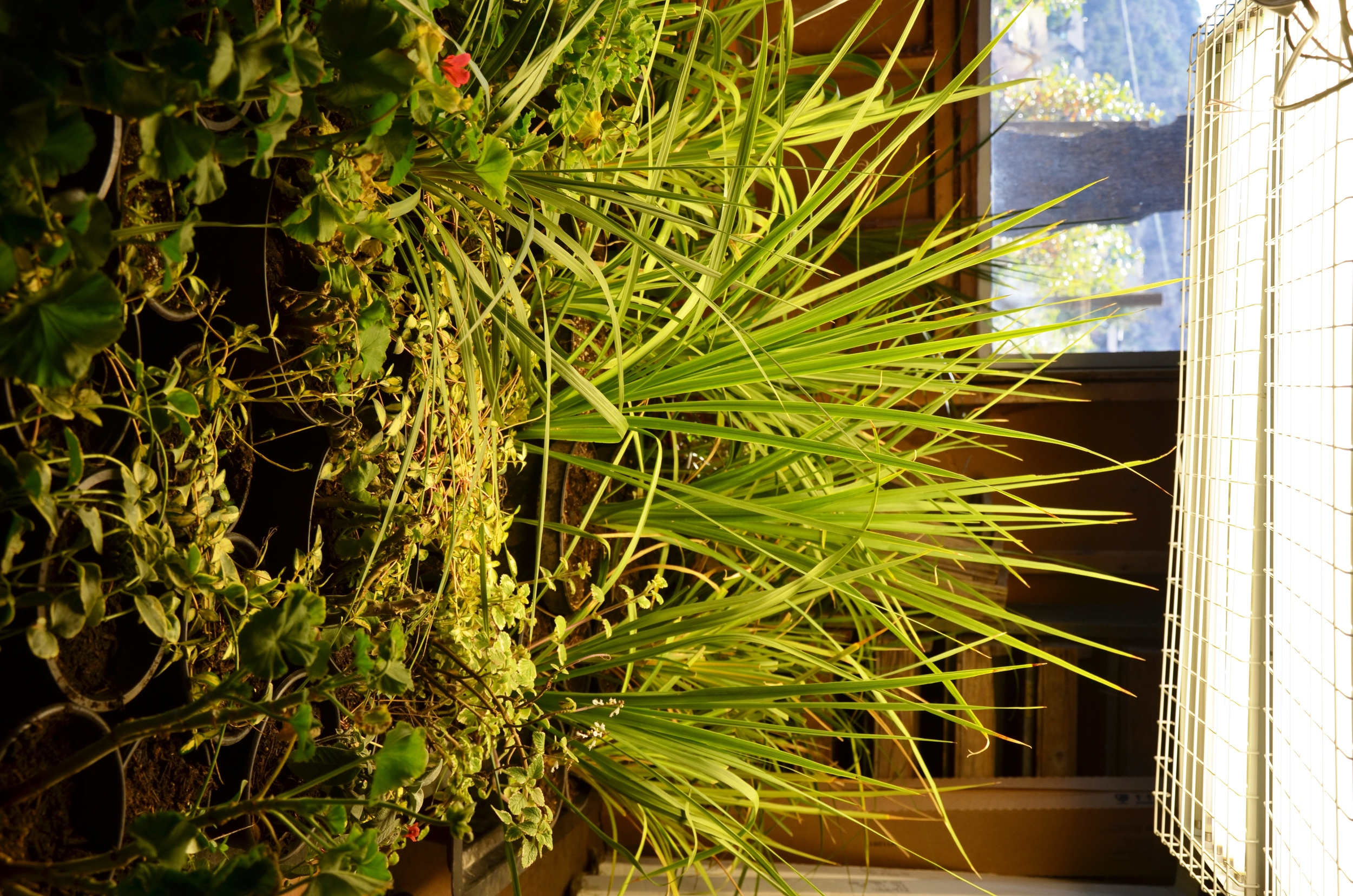 Plants being grown indoors over the cold season in the Bill White Farms house.
