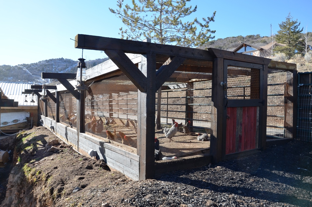 Chicken Coop -  Outside Free-Range Area