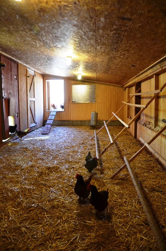 Chicken Coop -  Inside  Free-Range Area