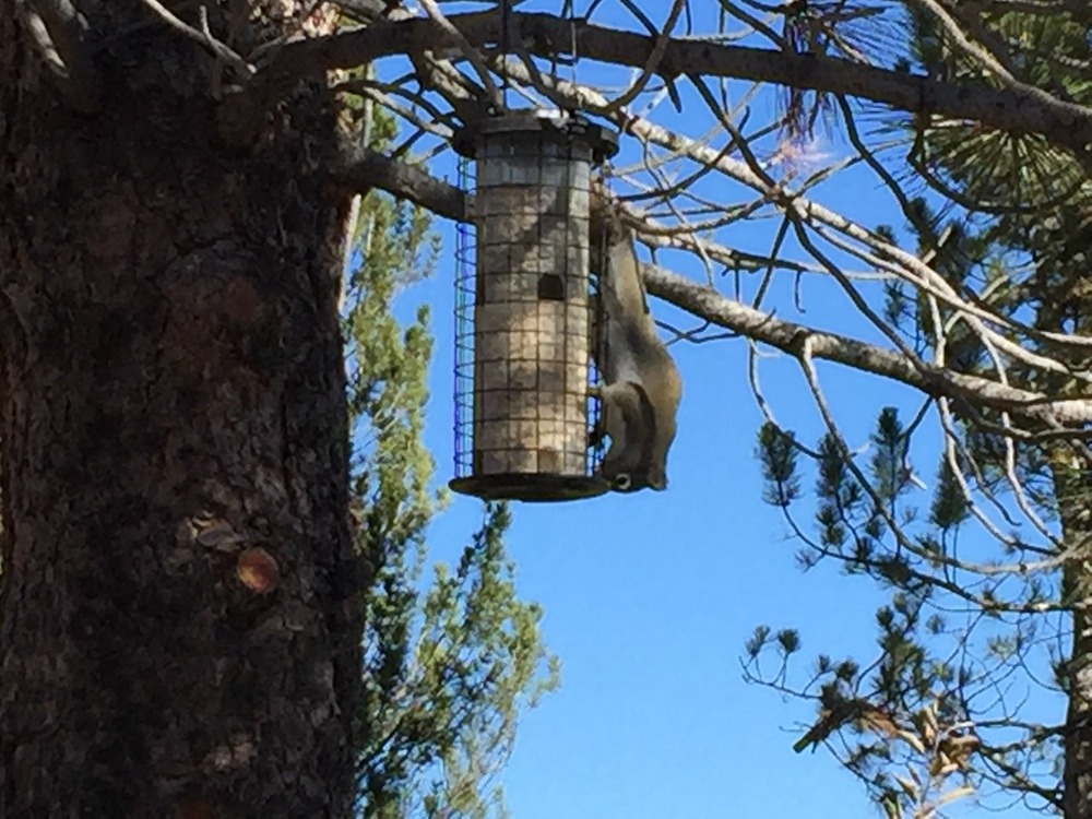 Squirrel Enjoying the Birds' Food
