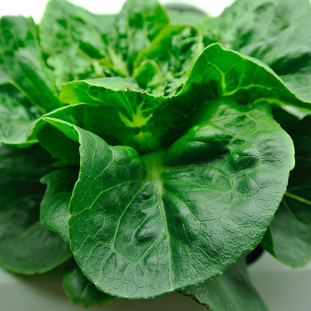 Some of these beautiful tasty greens will be available at our #FarmStand tomorrow!  Don't miss our Plant Sale with 1/2 Off prices!  Plus basil, spinach, salad mix, arugula, eggs and much more 👍🏽