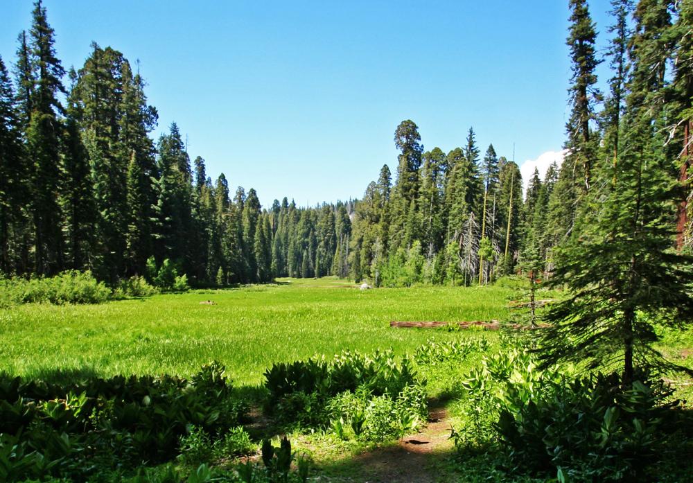 crescent_meadow.jpg