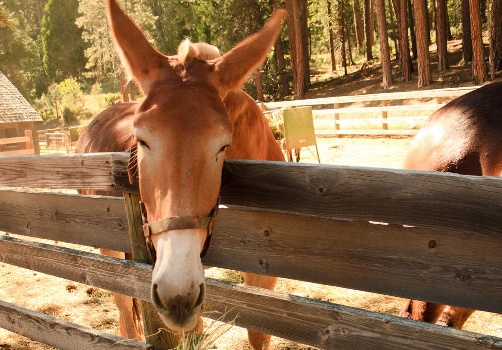 wawona_stables.jpg