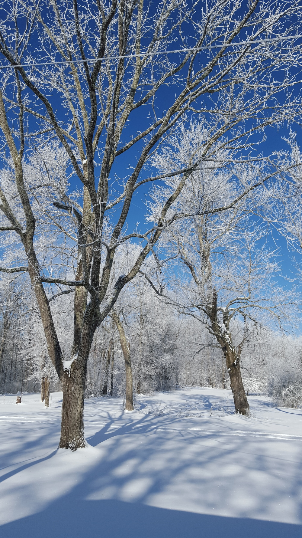Snowy trees in Scott County TN 15 minutes from Laurel Fork