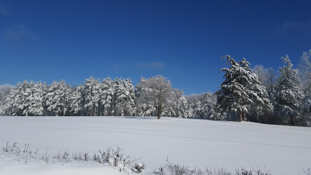 snow field and tree line