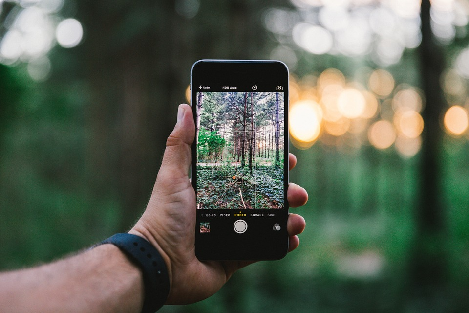 taking a photo of nature on smart phone