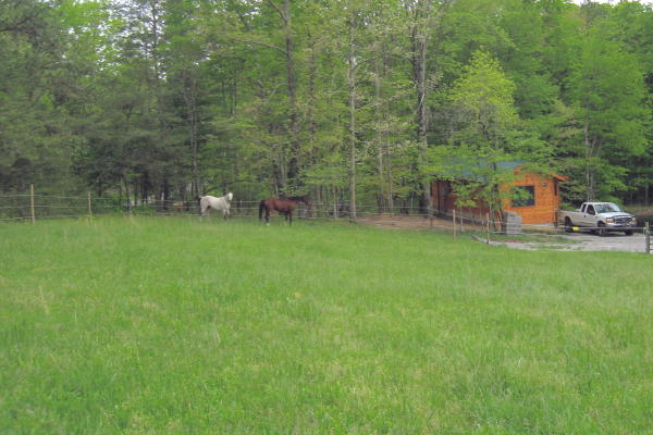 Horse pasture at Arabian Nights cabin.