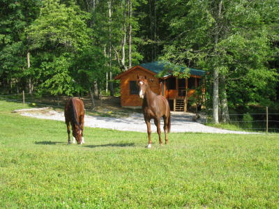 Horses grazing in front of Arabian Nights cabin.