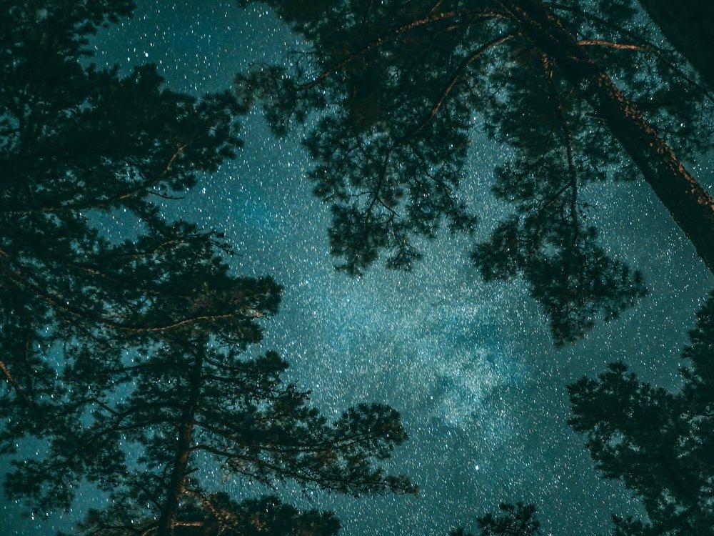 spring dark sky viewing