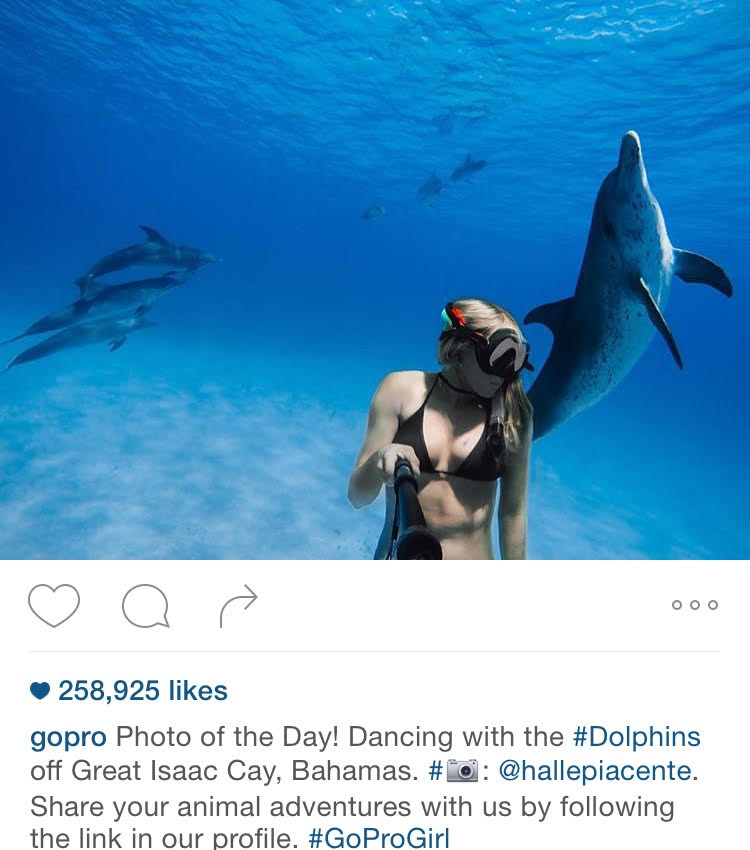 Swimming with Dolphins in Bimini
