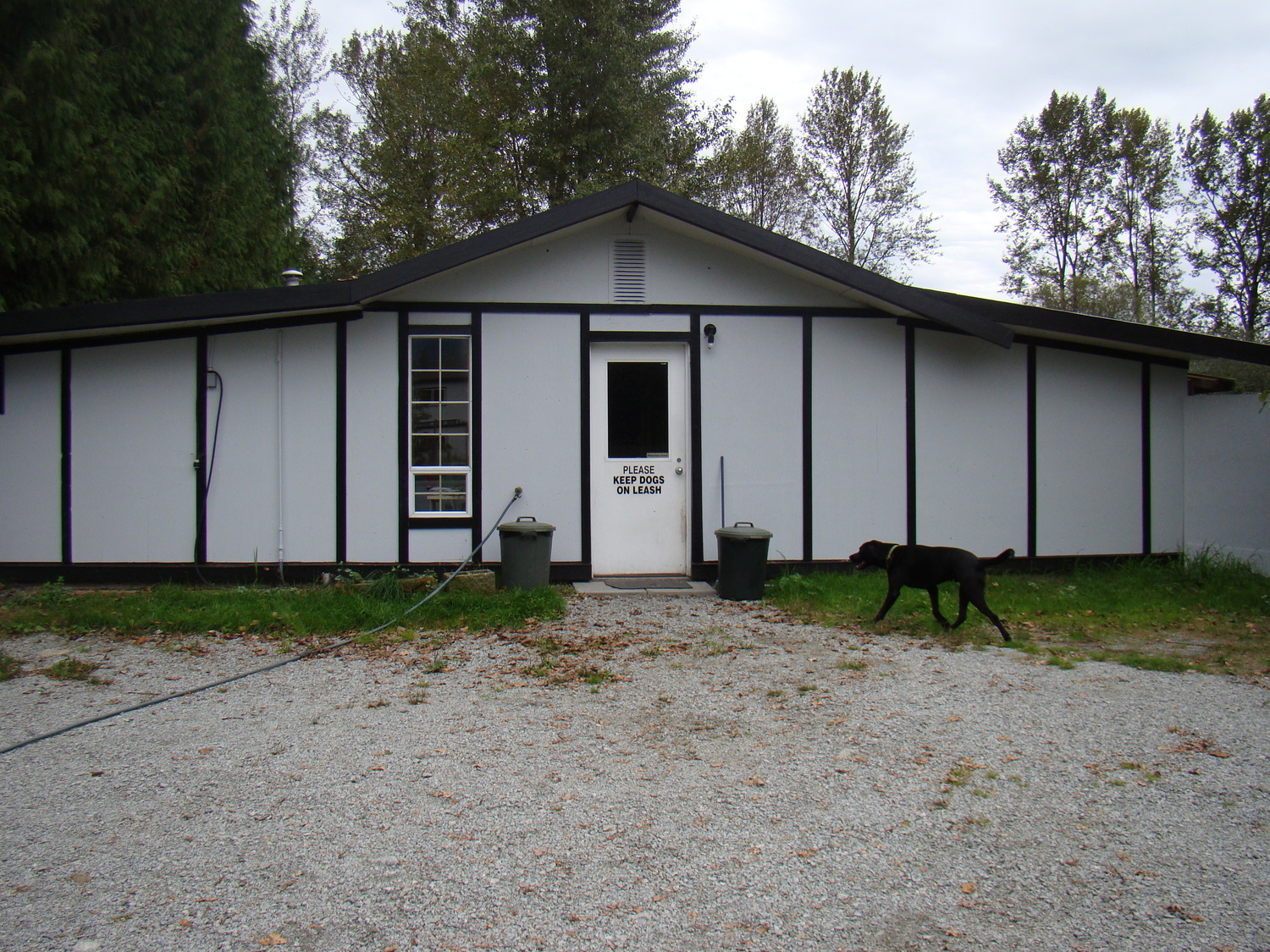 about dog boarding u2014 happy haven kennels