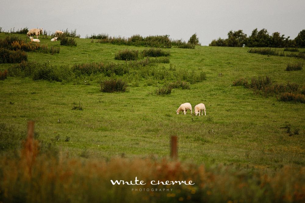 White Cherrie, Edinburgh, Natural, Wedding Photographer, Laura and Jamie previews (3 of 58).jpg