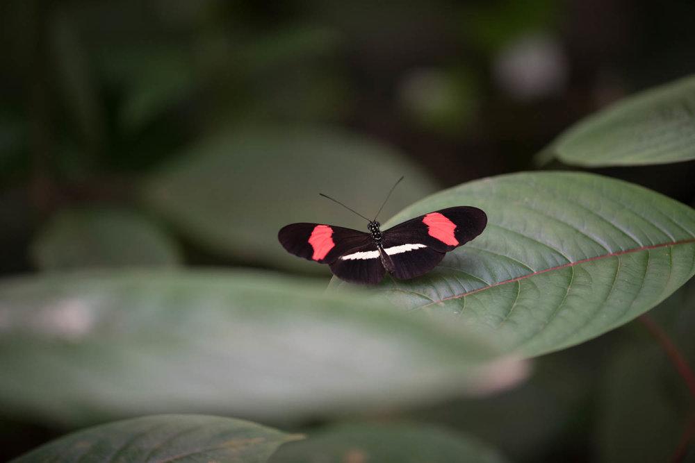 wildlife-26.jpg