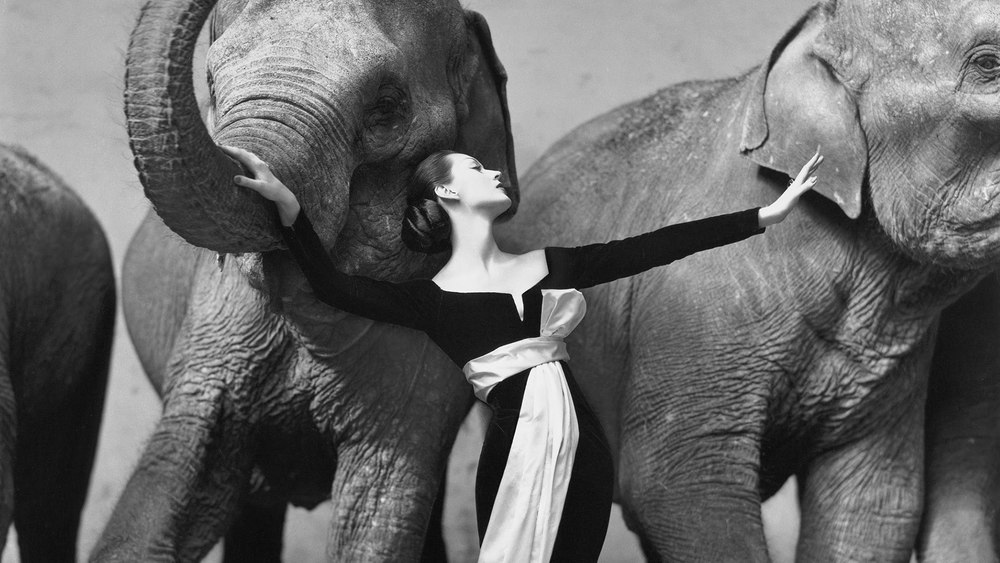 Artwork by Richard Avedon, Dovima with Elephants