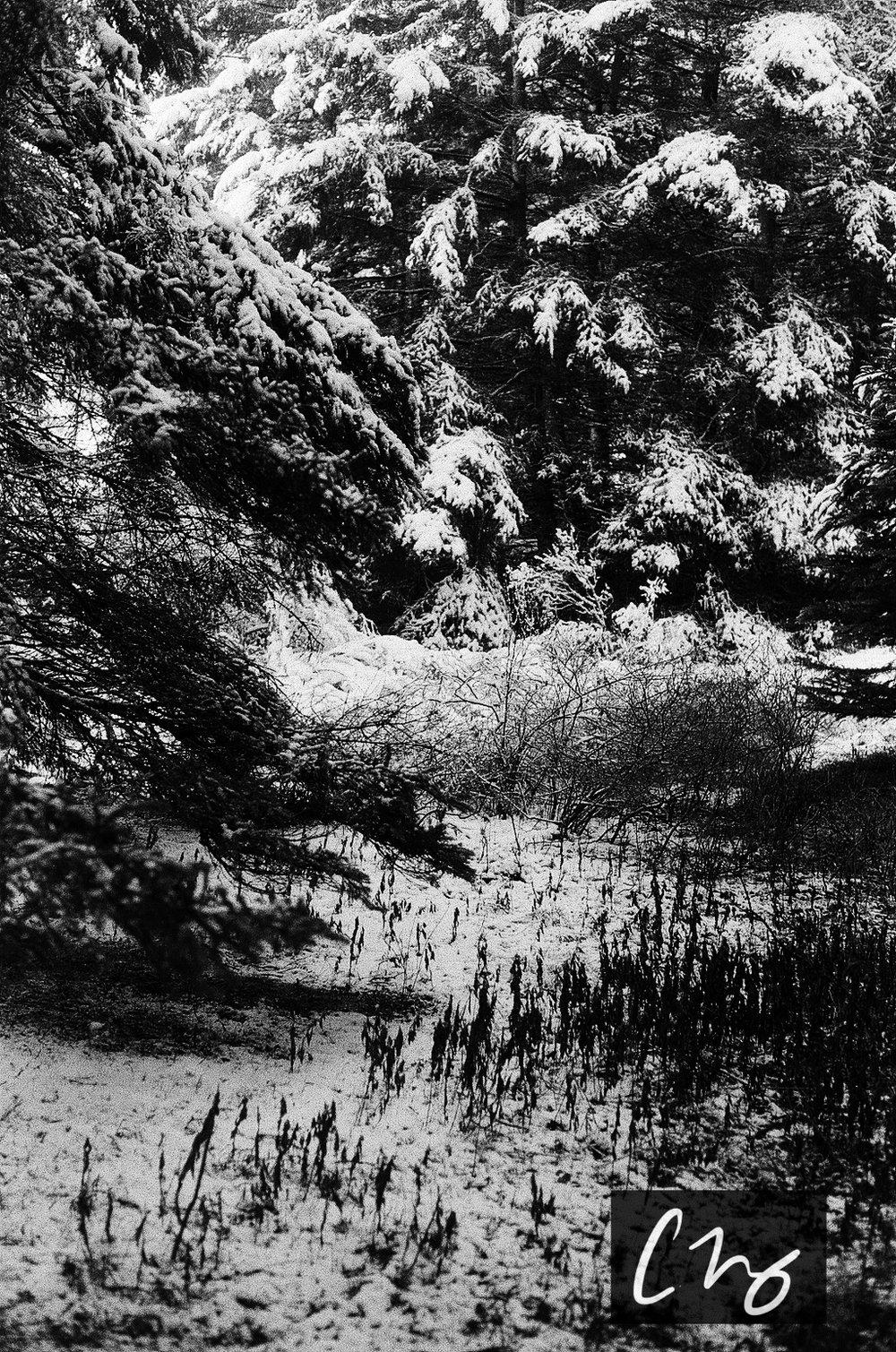 Wooden Islands-33.jpg