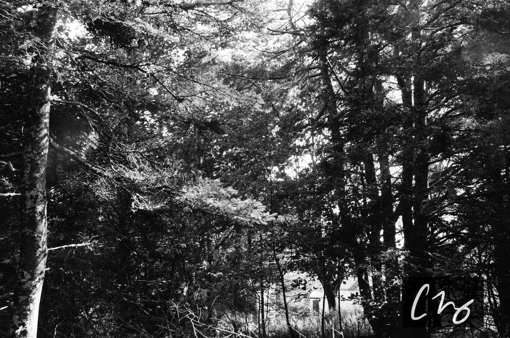 Wooden Islands-10-2.jpg