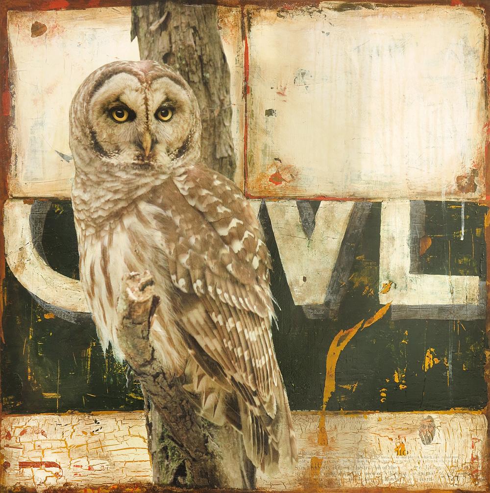 OWL, 30 X 30