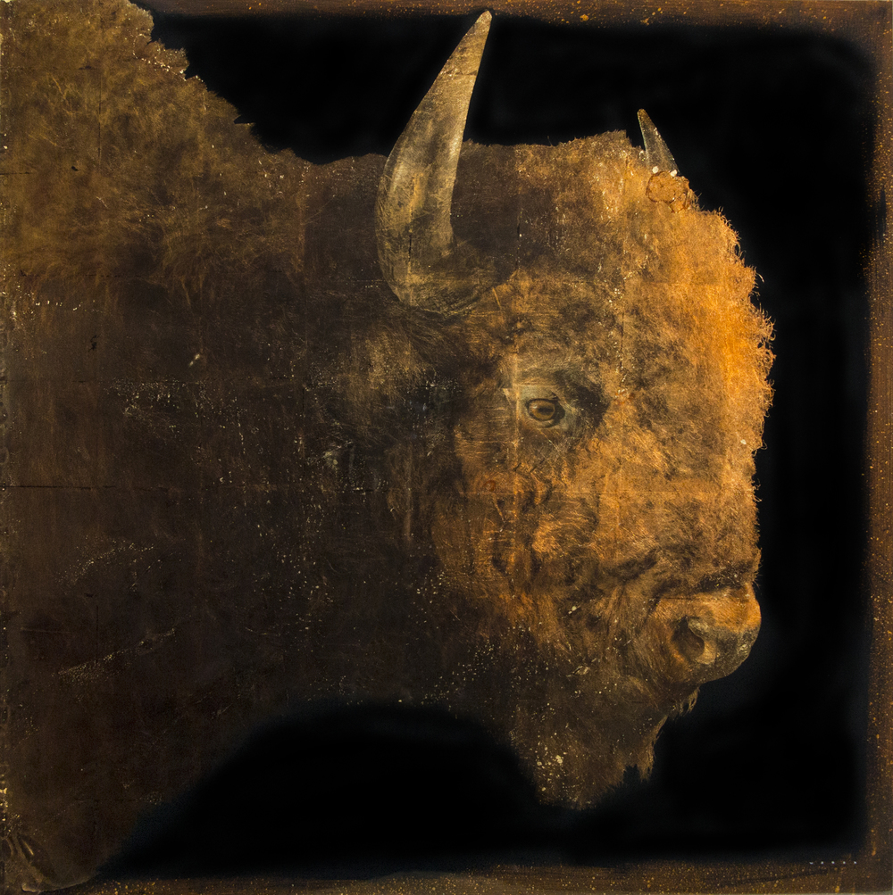 BUFFALO PROFILE, 48 X 48