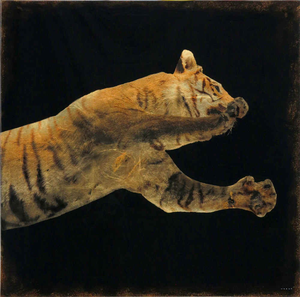 LEAPING TIGER, 36 X 36
