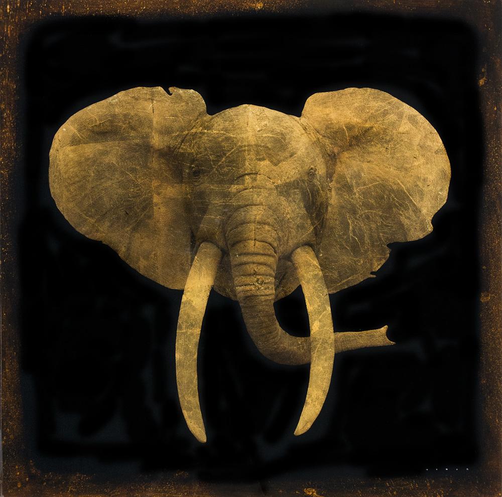 ELEPHANT, 30 X 30