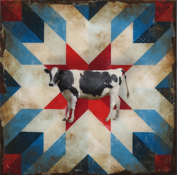 KONA COW, 36 X 36, SOLD