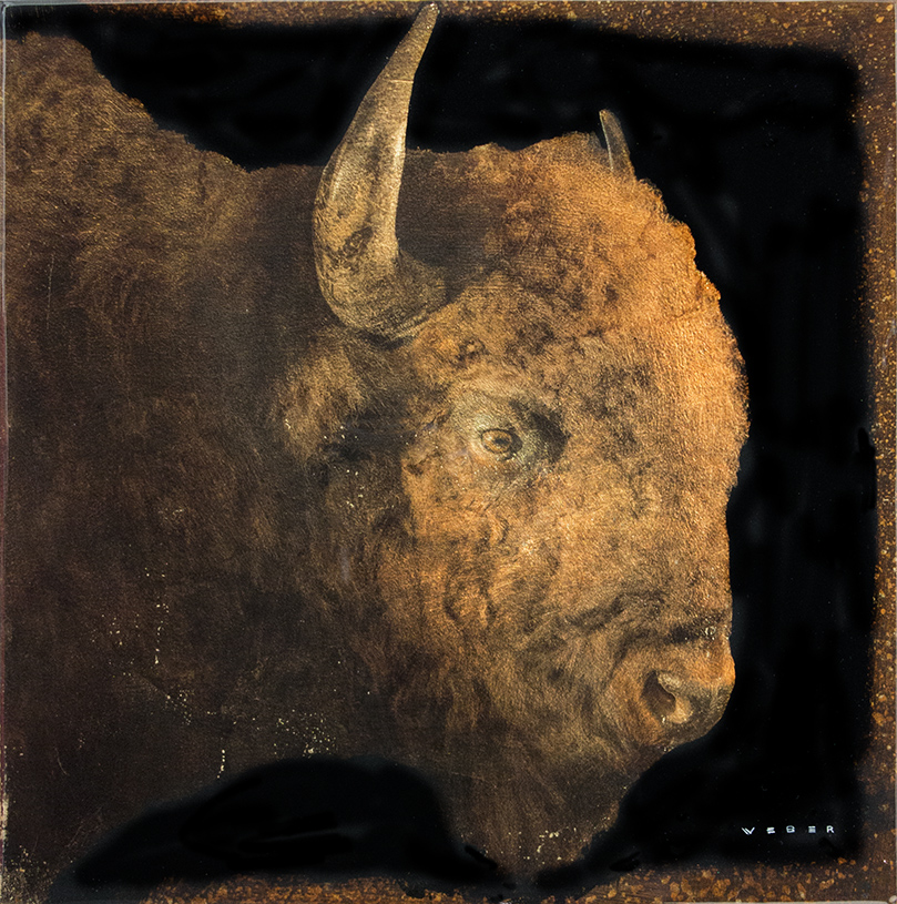 BUFFALO PROFILE, 12 X 12