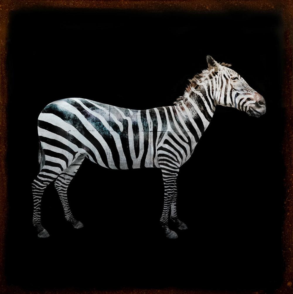 ZebraSilver.jpg
